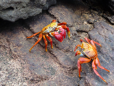 Two crabs square off.