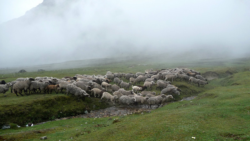 One of the coolest sights was this massive herd of sheep stampeding across the field beneath a misty mountain backdrop.