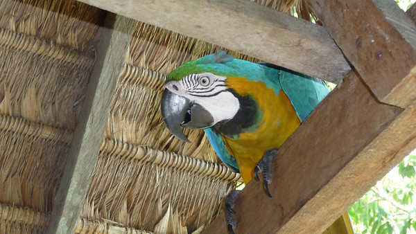 The resident parrot in the main lodge where we ate had a knack for pooping near or directly on unsuspecting guests!