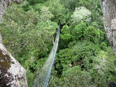 High above the canopy in the jungle, this bridge spanned a good 200 feet.
