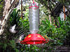 More humming birds flying around the feeders in the grounds of the hotel