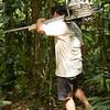 Amazon, piranhua fish, parrots, catapillars, ants, worker ants, birds of jungle, hiking, rainforest, brazil nuts, spiders, tarantula, canopy, leaves, fungus, texture of jungle, interior shots, monkeys, Rufugio Amazonas