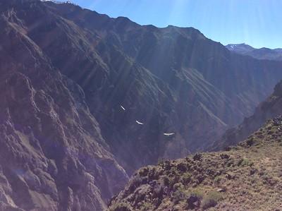 Долина «Крус дель Кондор» («Крест Кондора»), где можно понаблюдать за магическим полетом величественных кондоров.
