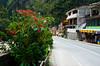 The main street of Agua Calientes, Peru near Macchu Pichu with poinsettia bush.