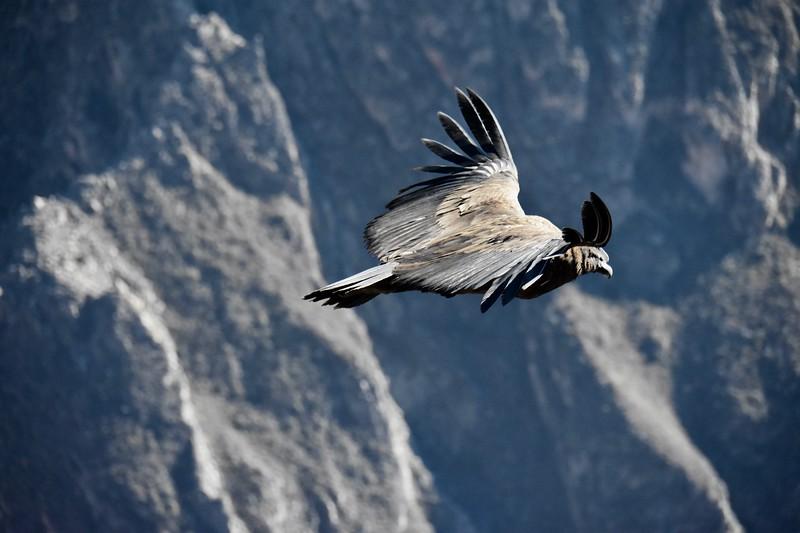 Cruz del Condor, Colca Canyon, Peru