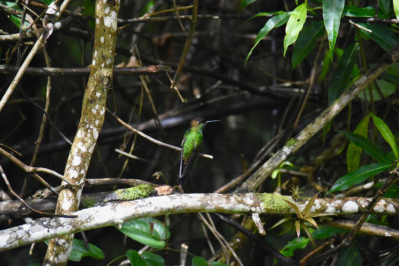 Huembo, Amazonas, Peru