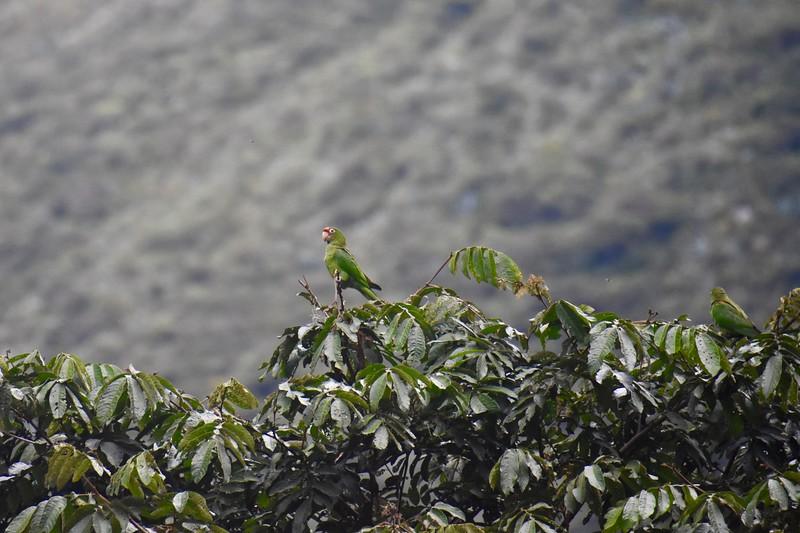 Kuelap, Amazonas, Peru