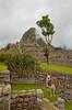 The Inca ruins of Machu Picchu with Llama.