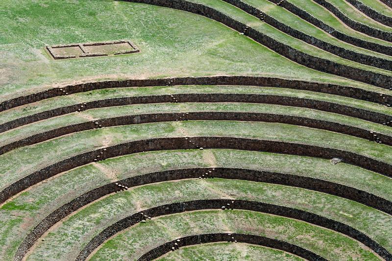 peru, sacred valley, moray, inka terrace farm