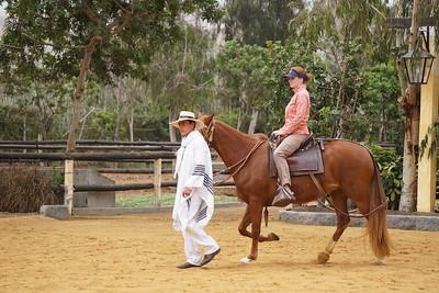 Peru-Paso-Horse-Show