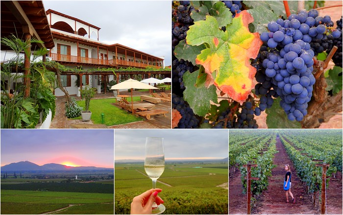 Queirolo Vineyard in Ica - a relaxing weekend trip from Lima