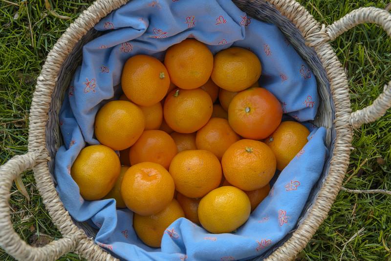 Food-Photography-Harshita-Mahajan (1 of 2)