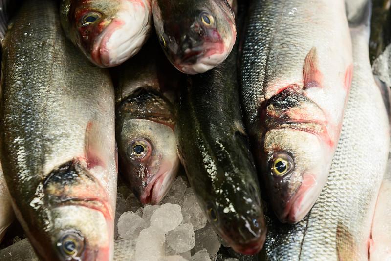 Fresh Fish Photographed at Westside Market