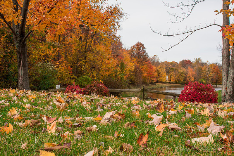 Fall in Strongsville