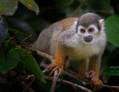 Peruvian Amazon - Dec. 2016
