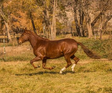 A mare gallops