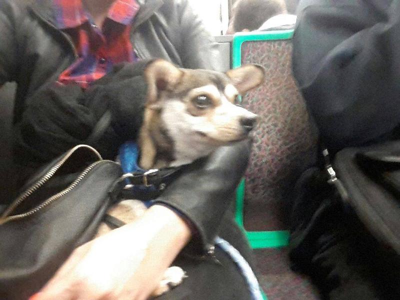 M on the Paris Metro