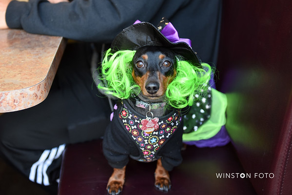 O'Niell's Pet Costume Contest and Fundraiser