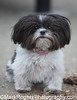 Betty<br /> Mi-Ki<br /> Saint Mary's Dog Park, San Francisco