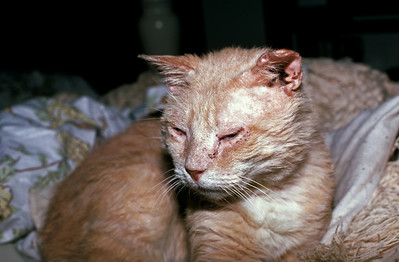 Buffy .. was a feral cat for many years ... until he came to live with us.