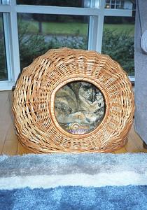 A basket full of Sunshine