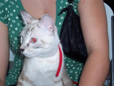 Cat Customer