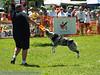 17th Annual SPCA Doggy Dash 178