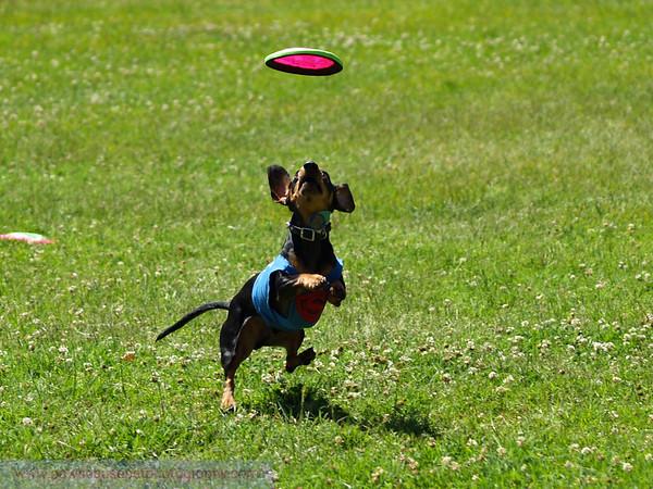 17th Annual SPCA Doggy Dash 085