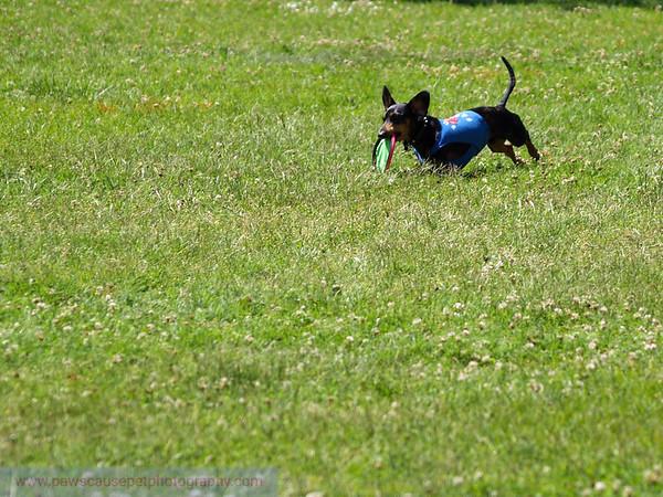 17th Annual SPCA Doggy Dash 090