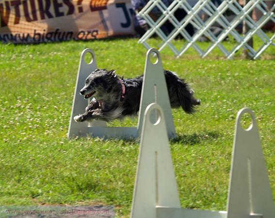 17th Annual SPCA Doggy Dash 023