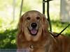 17th Annual SPCA Doggy Dash 013