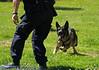 17th Annual SPCA Doggy Dash 081