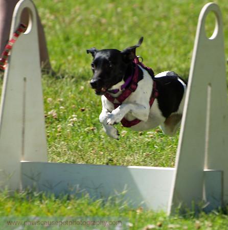 17th Annual SPCA Doggy Dash 042