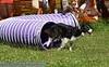 17th Annual SPCA Doggy Dash 050