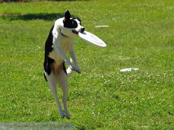17th Annual SPCA Doggy Dash 163
