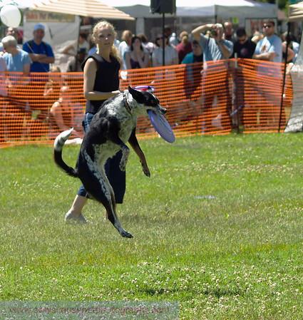 17th Annual SPCA Doggy Dash 134