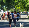 17th Annual SPCA Doggy Dash 011