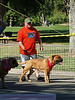 17th Annual SPCA Doggy Dash 010
