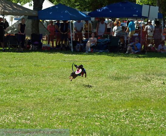 17th Annual SPCA Doggy Dash 087