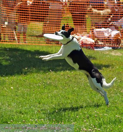 17th Annual SPCA Doggy Dash 159