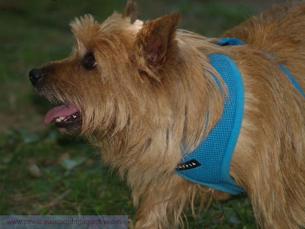 17th Annual SPCA Doggy Dash 180a