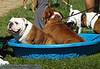 17th Annual SPCA Doggy Dash 041