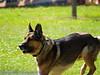 17th Annual SPCA Doggy Dash 074