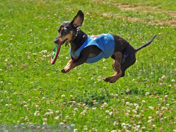 17th Annual SPCA Doggy Dash 101