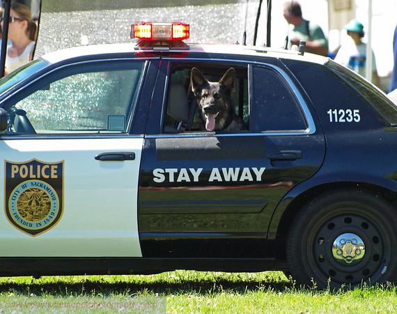 17th Annual SPCA Doggy Dash 069