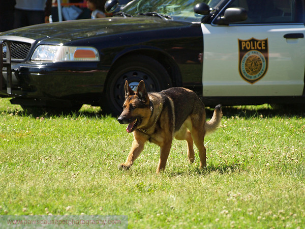 17th Annual SPCA Doggy Dash 063