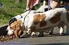 17th Annual SPCA Doggy Dash 018