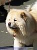 17th Annual SPCA Doggy Dash 019