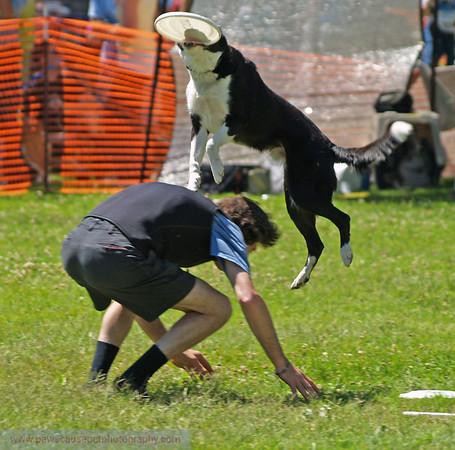 17th Annual SPCA Doggy Dash 114