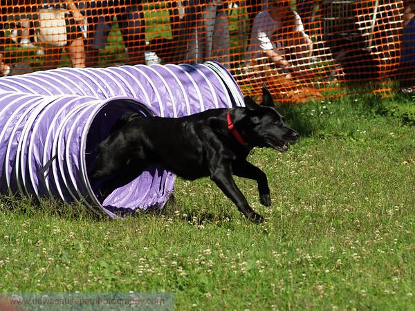 17th Annual SPCA Doggy Dash 052